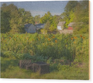 Langwater Farm Sunflowers And Barns Wood Print