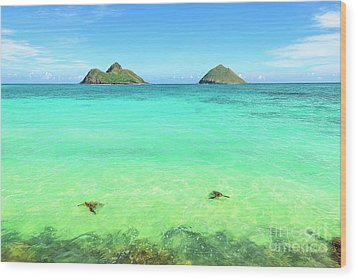 Lanikai Beach Two Sea Turtles And Two Mokes Wood Print