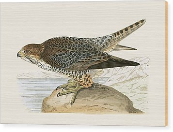 Lanner Falcon Wood Print by English School