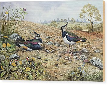 Lapwing Family With Goldfinches Wood Print by Carl Donner