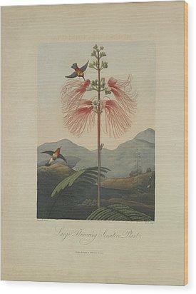 Large Flowering Sensitive Plant Wood Print by Robert John Thornton