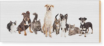 Large Group Of Cats And Dogs Together Wood Print