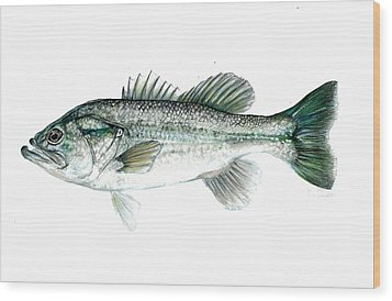 Large Mouth Bass Wood Print by Jim  Romeo