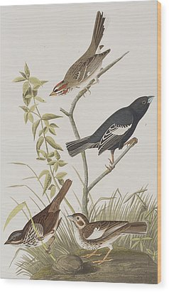 Lark Finch Prairie Finch Brown Song Sparrow Wood Print by John James Audubon