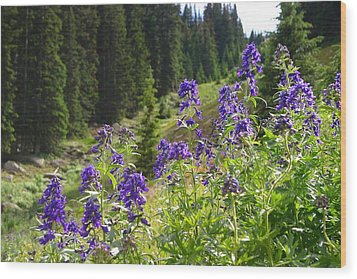 Wood Print featuring the photograph Larkspur Along Trail Ridge Road by Perspective Imagery