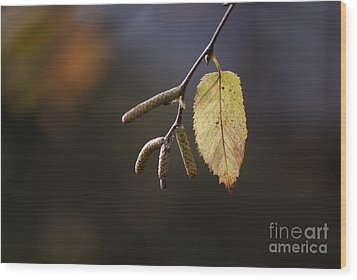 Last Call Of Fall Wood Print by Randy Bodkins