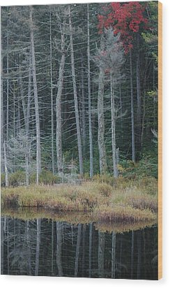 Last Color Wood Print by William A Lopez