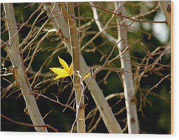 Wood Print featuring the photograph Last Leaf by Kume Bryant