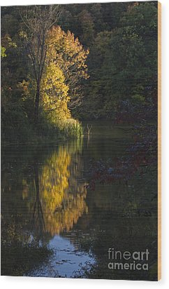Wood Print featuring the photograph Last Light - D009910 by Daniel Dempster