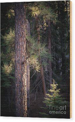 Wood Print featuring the photograph Last Light by The Forests Edge Photography - Diane Sandoval