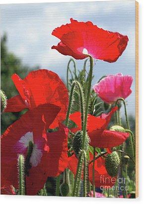 Last Poppies Of Summer Wood Print by Stephen Melia