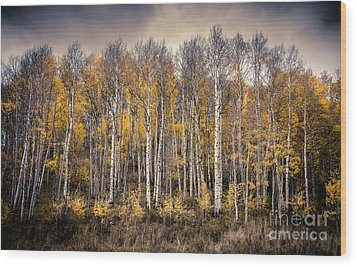 Wood Print featuring the photograph Late Fall by The Forests Edge Photography - Diane Sandoval