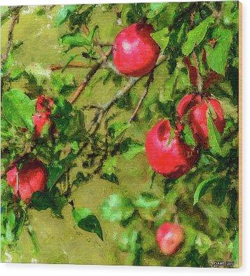 Late Summer Apples Wood Print by Ken Morris