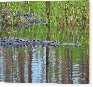 Wood Print featuring the photograph Later Gator by Al Powell Photography USA