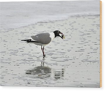 Laughing Gull Meal Wood Print by Al Powell Photography USA