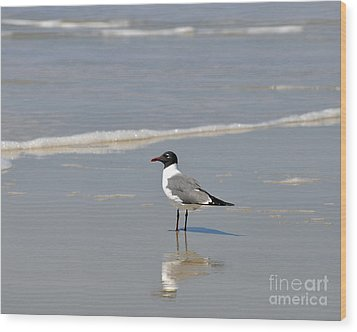 Laughing Gull Reflecting Wood Print by Al Powell Photography USA