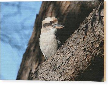 Laughing Kookaburra  Wood Print by Tony Brown