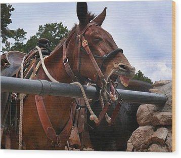 Laughing Mule Wood Print
