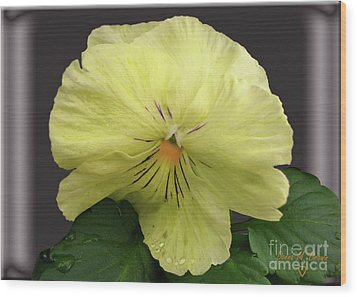 Wood Print featuring the photograph Laughing Pansy by Donna Brown