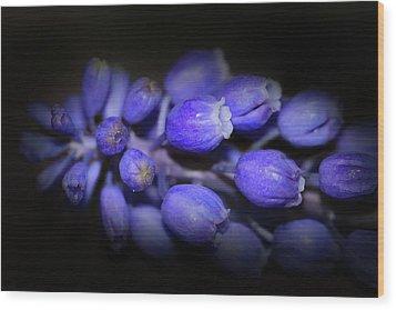 Lavendar Blue Wood Print by Kim Henderson