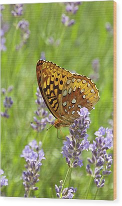 Lavender And Butterfly 2 Wood Print by Lara Ellis