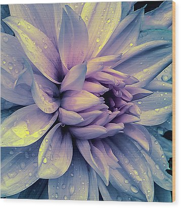 Wood Print featuring the photograph Lavender And Pink Dahlia And Water Drops by Julie Palencia