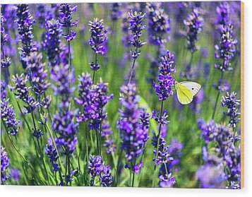 Wood Print featuring the photograph Lavender And The Heart by Ryan Manuel