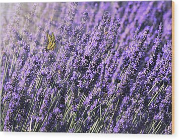 Wood Print featuring the photograph Lavender And Tiger Swallowtail In The Morning Light by Diane Schuster