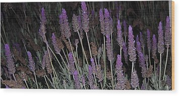 Lavender At Night Wood Print by Jean Booth