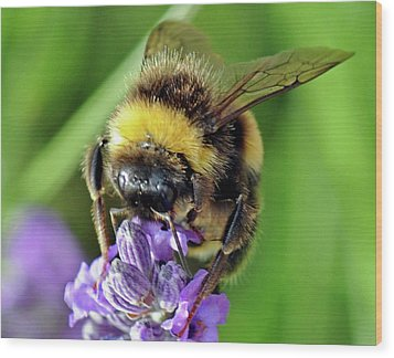 Lavender Bee Wood Print
