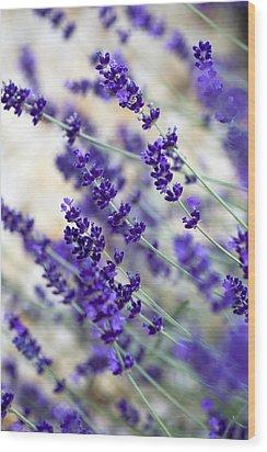 Lavender Blue Wood Print by Frank Tschakert