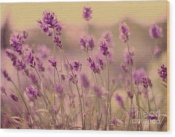 Lavender Dreaming ... Wood Print by Chris Armytage