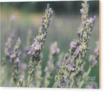 Wood Print featuring the painting Lavender by Eric  Schiabor