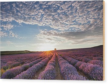Lavender Wood Print by Evgeni Dinev