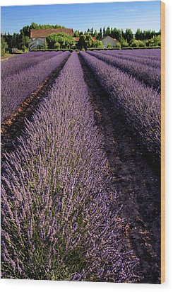 Lavender Field Provence France Wood Print