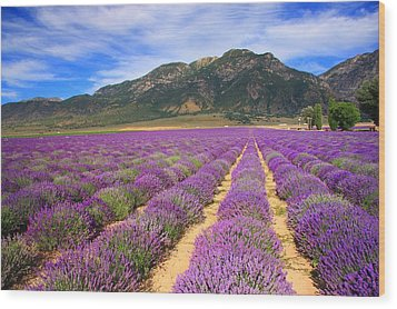 Lavender Fields Forever Wood Print