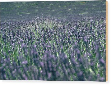 Lavender Wood Print by Flavia Westerwelle