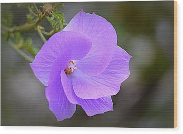 Wood Print featuring the photograph Lavender Flower by AJ Schibig