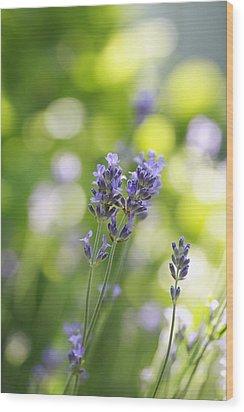 Lavender Garden Wood Print by Frank Tschakert
