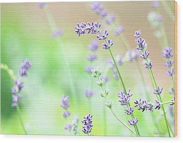 Lavender Garden Wood Print