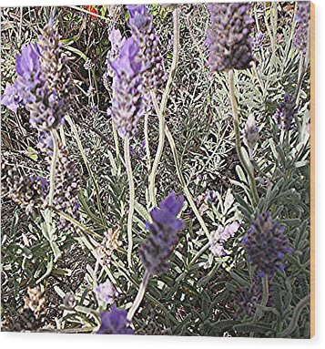 Lavender Moment Wood Print by Winsome Gunning