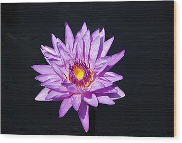 Lavender On Black Wood Print by William Thomas