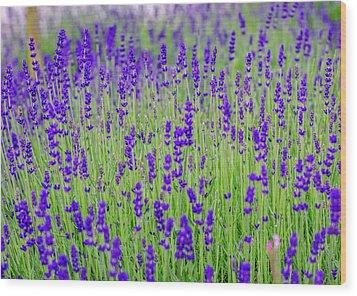 Lavender Wood Print by Rainer Kersten