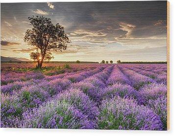 Lavender Sunrise Wood Print by Evgeni Dinev