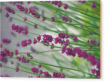 Wood Print featuring the photograph Lavender by Susanne Van Hulst