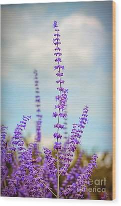 Wood Print featuring the photograph Lavender To The Sky by Kerri Farley