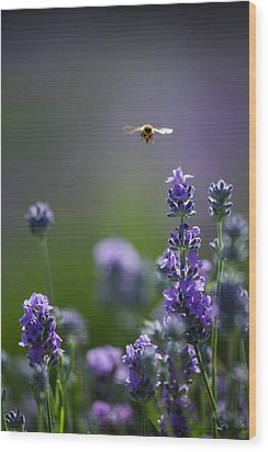 Lavender User Wood Print