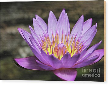 Lavender Water Lily #3 Wood Print