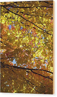 Wood Print featuring the photograph Layers Of Autumn by Corinne Rhode