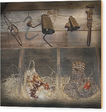 Laying Hens Wood Print by Kim Henderson